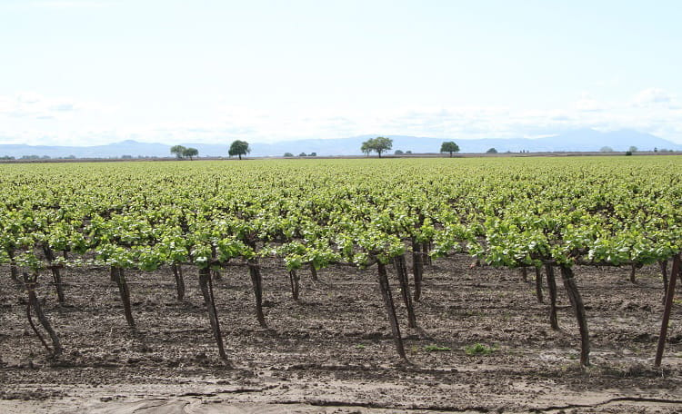 Bixler Farms